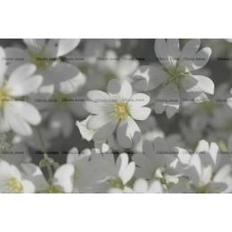 Flower digital Background