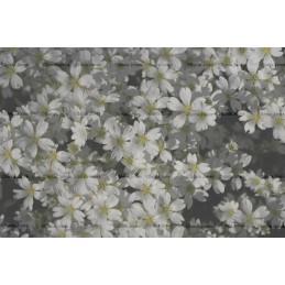 White Flower Digital Background